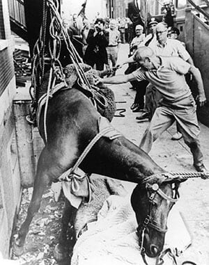 Mounted Police - Tony the Horse - 1969 photo