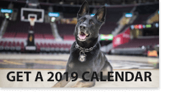2019 dog and pony show calendar preview box
